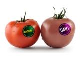 转基因及动物源性食品