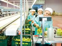食品农产品检测