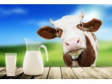 牛奶的味觉检测