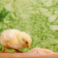 饲料及宠物食品检测