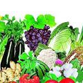 山东嘉源检测技术有限公司食品中农药残留检测