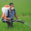 农药敌百虫常规检测