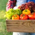 食品真菌毒素及污染物检测