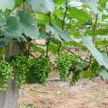 转基因农产品检测