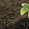 土壤+挥发性有机物